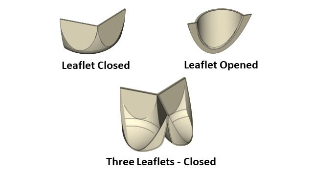 Leaflet Shape